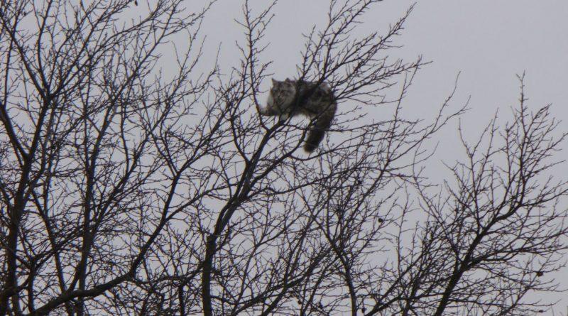 Šokujúca správa: V Ruskom žijú mačky na stromoch